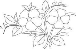 Violeta do desenho de lápis Imagem de Stock Royalty Free