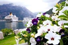 Violeta e petunias Foto de Stock