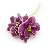 Violeta, flor Fotos de Stock Royalty Free