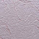 A violeta não é emplastro liso Foto de Stock