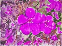 Violeta rosada Foto de archivo libre de regalías