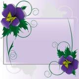 Violetas Foto de archivo libre de regalías