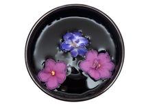 Violetas fotos de archivo