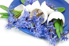 Violetas Imagens de Stock