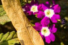 Violetas brillantes y hojas de otoño caidas Fotos de archivo