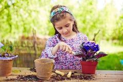 Violetas de la replantación Imagen de archivo libre de regalías