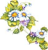 Violetas de las margaritas Fotografía de archivo