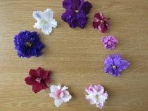 violetas del desfile Fotos de archivo libres de regalías