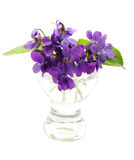 Violetas em um vaso Fotos de Stock Royalty Free
