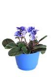 Violetas en un crisol Imagen de archivo