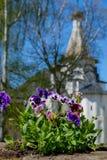Violetas en un jardín de la iglesia Imágenes de archivo libres de regalías