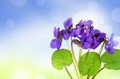 Violetas en una hierba y un bokeh Imágenes de archivo libres de regalías