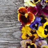 Violetas en viejo fondo de madera Fotografía de archivo libre de regalías