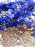 Violetas na água Foto de Stock Royalty Free