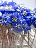 Violetas na água Imagens de Stock Royalty Free