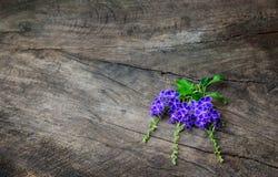 Violetas y flores púrpuras en la tabla de madera vieja fotografía de archivo libre de regalías