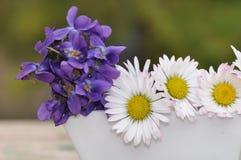 Violetas y margaritas en un pequeño florero Fotos de archivo libres de regalías