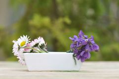 Violetas y margaritas en un pequeño florero Fotografía de archivo libre de regalías
