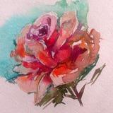 Violeten för den färgrika blomman för vattenfärgkonstbakgrund steg den röda rosa Arkivbild