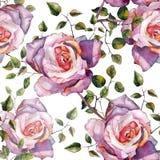 Violeten steg, vattenfärgen, mönstrar sömlöst, handgjort Royaltyfri Bild