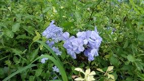 VioletFlower,很美好的自然 免版税库存图片