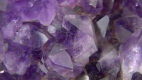 Violetkleurige Dichte Omhooggaand stock videobeelden