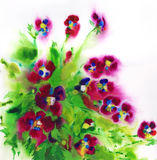 Violets. Watercolor painting of a bouquet of violets royalty free illustration