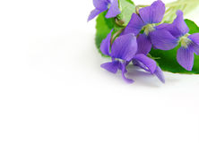 Violets Royalty Free Stock Images