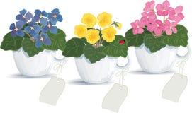 Violets vector illustration
