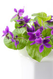 Violets Stock Photos