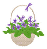 Violets in basket Stock Images