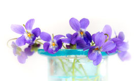 Violets in blue glass vase Royalty Free Stock Images