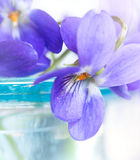 Violets in blue glass vase Stock Photos