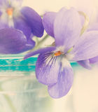 Violets in blue glass vase Stock Photo