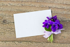 Violets Royalty Free Stock Photography