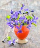 Violets flowers (Viola odorata) Stock Images