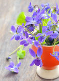 Violets flowers (Viola odorata) Royalty Free Stock Photo