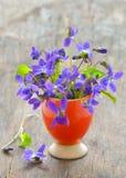 Violets flowers Viola odorata Stock Image