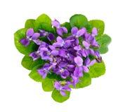 Violets Heart. Stock Images