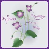 Violets. Messengers of spring. vector illustration