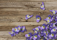 Violets on old  boarderes Stock Photo