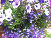 Violets and purples. Violet and purple flowers Stock Image