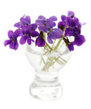 Violets in a vase. Violets in a glass vase on a white background Stock Image