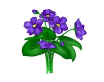 Violets On White Royalty Free Stock Photos