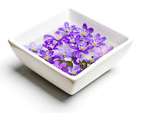 Violets in the white vase low angle Royalty Free Stock Photography