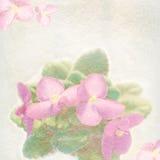 Violetsbakgrund i en tappningstil Royaltyfri Bild