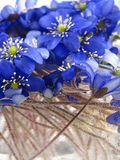 violetsvatten Royaltyfri Foto