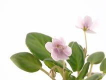 Violett Stockbilder