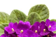 Violett Stockfotos