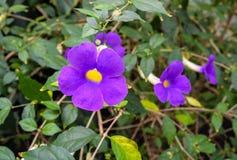 violett Royaltyfria Foton